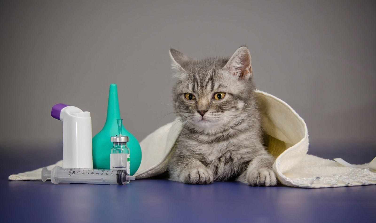 Как вылечить сухой кашель в домашних условиях 66